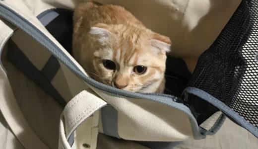 こむぎの新しいかばん到着!