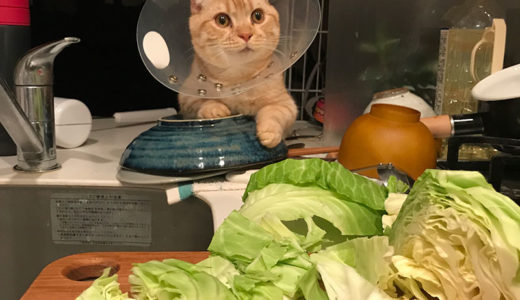 こむぎ先生の料理教室